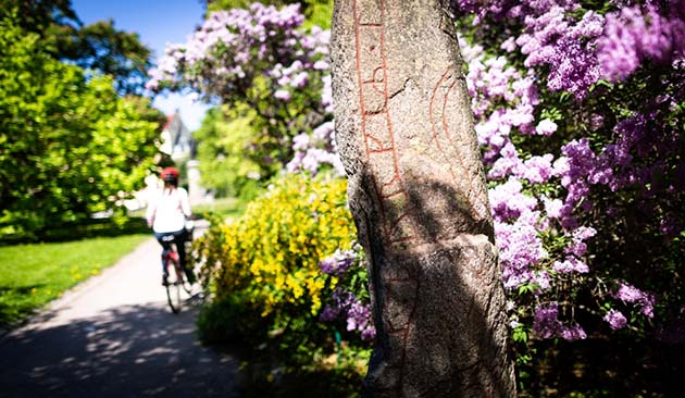 A person on a bicycle passing by one of the rune stones in the University Park.